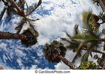 Palm-trees in fish-eye lens - Canary Islands Spain...