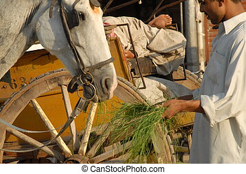 Horse and cart in Lahore, Pakistan - Pakistani cart driver...