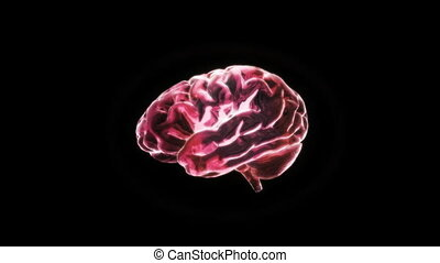 red brain - X-ray Brain to represent the theme of human,...