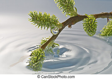 plant buds in a water
