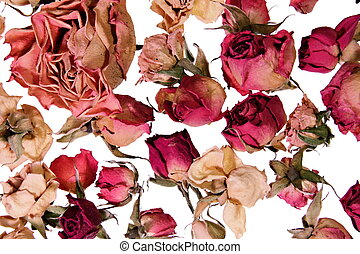 Dry roses background for memories