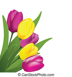 Spring tulips on the white background. Vector illustartion