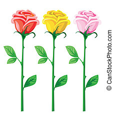 three vector rose flowers isolated on white