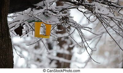 Nesting box HD - Nesting box for birds is hanging on a tree