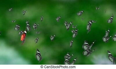 contrast mass butterfly