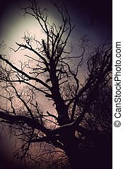 Tree in moonshine - Silhouette of bare tree in moonshine