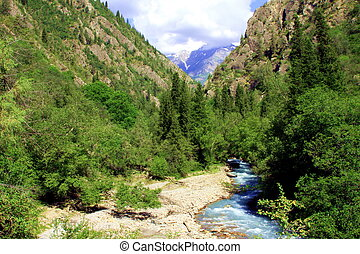 Alpine forest in valley - Bottom of a valley with a river in...