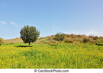 Early spring in southern Israel.