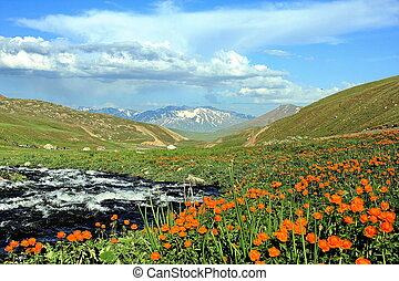 Flowers and glacier fed river - Orange flowers and a...