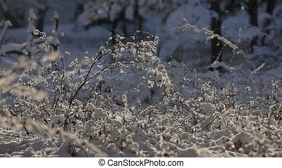 Snow-covered grass.  HD