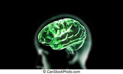 green head brain - X-ray Brain to represent the theme of...