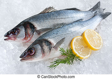 Seabass on ice - Seabass Dicentrarchus labrax on ice at the...