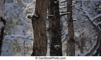 Forest in winter time. HD