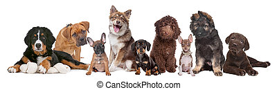 large group of puppies on a white background.from left to...