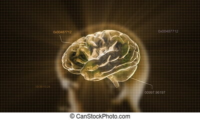 gold head brain - X-ray Brain to represent the theme of...