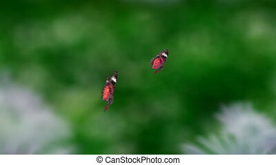 red couple butterfly