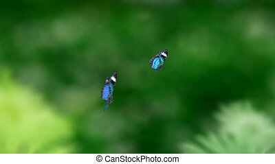 blue couple butterfly