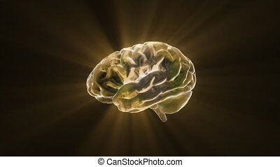 gold brain - X-ray Brain to represent the theme of human,...