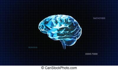 brain random code
