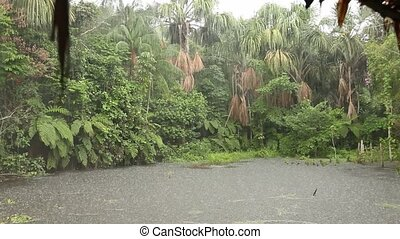 Rain In Rainforest