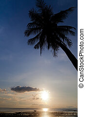 Sunset with palm tree silhouette in Thailand, Koh Samui