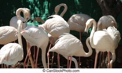Flamingos - Group of flamingo in the zoo