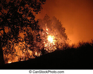Wild Fire - Trees are wiped away by the2005 San Fernando...