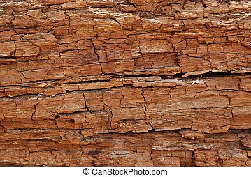 Texture of cracked rotten wood