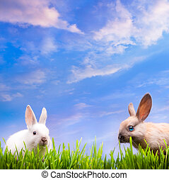 art couple little Easter rabbits on green grass - two little...