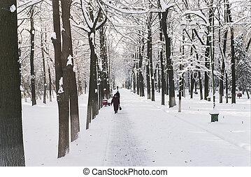 Path through forest in Bishkek - Snowy path through a tree...