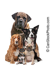 five dogs - Five dogs in front of a white background