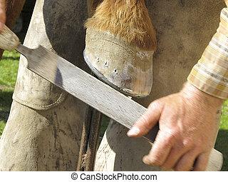 Rasping a Horseshoe and Hoof