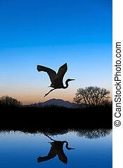 Egret Flying on Blue Evening