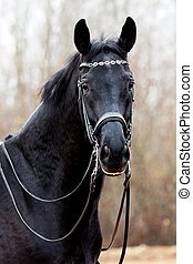 Black horse - stallion, black, horse, animal, equine,...