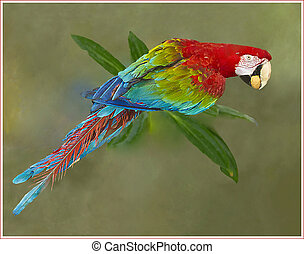 Red-and-Green Macaw in natural habitat setting_Ara...