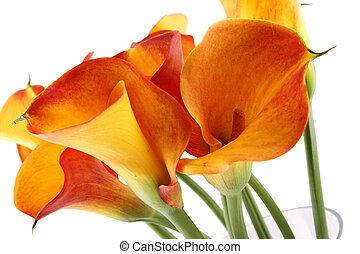 Bouquet Calla - Close-up of a bouquet of calla lilies in a...
