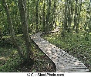 tourist walk wooden path