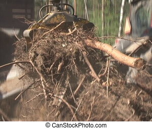 organic fuel production - Special machinery chopping tree...