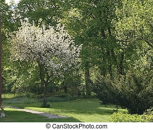 spring blooming tree - Spring garden details Blooming fruit...