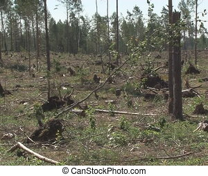 Deforested area field