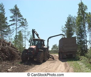 wood fuel production - Special machines chop wooden tree...