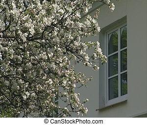 Blossom fruit tree branch - White blossoming apple fruit...