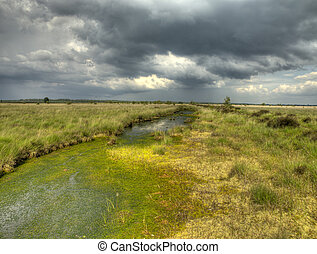 Sphagnum acid bog - Swamp National Park in the Netherlands