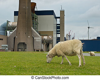 Grazing sheep in front of an industrial plant