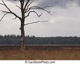 Dead tree in a dutch nature reserve