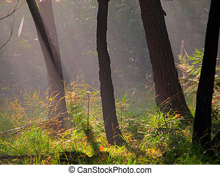 Stems of trees in early morning hazy light