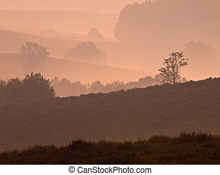Trees during sunrise in silhoutted hilly landscape
