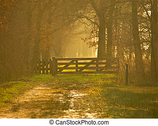 Entrance gate in yellow light - Entrance gate to a nature...