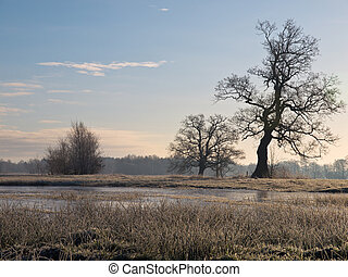 Trees in winter landscape in dutch river basin