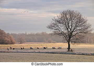 Tree and sheep in rimed winter landscape while a flock of...